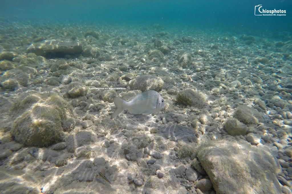 Παραλία Αυλωνιά Πυργίου Χίος