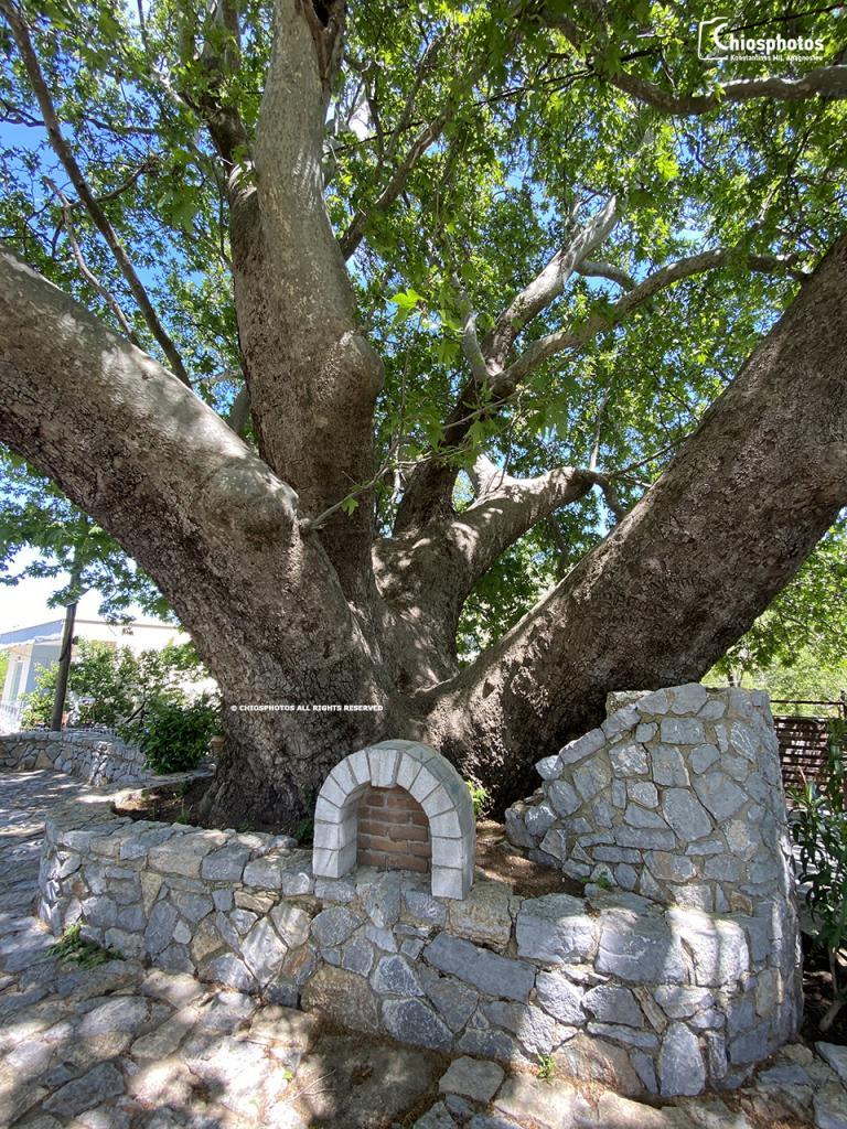 Πιτυός Χίος